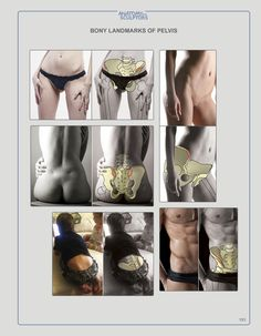 Anatomy Next store - PDF EBOOK download  For Artists