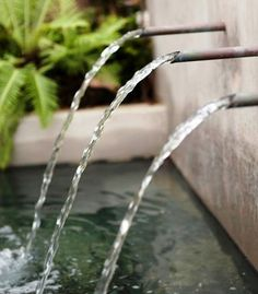 Gray water systems: Learn about using gray water (like from laundry and baths) in your landscaping. | Living the Country Life | http://www.livingthecountrylife.com/country-life/going-green/gray-water-systems/