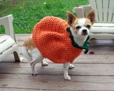 Pumpkin - Brilliant Halloween Costumes for Your Dog - Photos