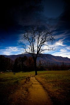 Leafless tree and shadows
