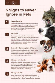 Dog Health Tips, Dog Health Care, Meds For Dogs, Medication For Dogs, Pet Care Tips, Dog Care, Vet Tech Student, Pet Health Insurance, Funny Parrots
