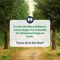 It costs 38 trillion dollars to create oxygen for 6 months for all human beings on Earth. Trees do it for free! Open Secrets, Life Motto, Letter Board, Facts, 6 Months, Trees, Create, 6 Mo, Motto