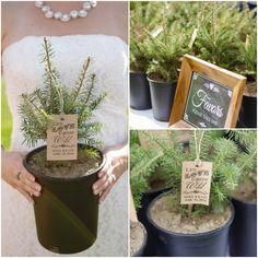 Fresh Evergreen Tree Wedding Favor