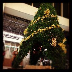 Among the Christmas tree is like a kaleidoscope. クリスマスツリー design Toshihide Okamoto MACHINO-hanayasan www.machinohana.com tumblr (Toshihide Okamoto) toshihide-okamoto... Facebook www.facebook.com/... Facebook www.facebook.com/... instagram instagram.com/...