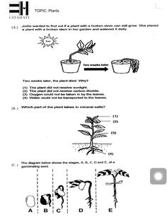 Theme 4, Seatwork #1, Plants, Page 1