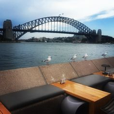 The seagulls with the best view in the Harbour!! Having a last fling with the family before heading home... #sydneyharbourbridge #seeaustralia #Sydney #thisisnsw #sydneyharbour #wow_australia #seagulls #NSW by financechicks http://ift.tt/1NRMbNv