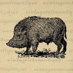 Printable Wild Boar Digital Image Antique Illustration Graphic Download Vintage Clip Art Jpg Png Eps  HQ 300dpi No.3242 @ vintageretroantique.com #DigitalArt #Printable #Art #VintageRetroAntique #Digital #Clipart #Download