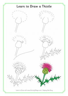Learn To Draw A Thistle