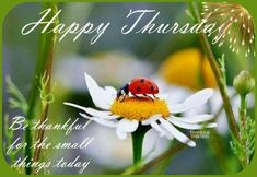 Happy Thursday Pictures, Happy Thursday Quotes, Happy Day Quotes, Thursday Humor, Good Night Funny, Good Morning Good Night, Friday Morning Quotes, Thursday Greetings, Morning Greeting
