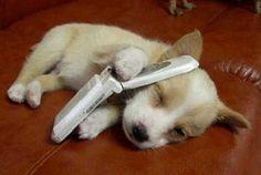 もしもし?聞こえまちゅか?