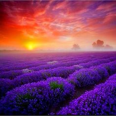 """""""Bursts of gold on lavender melting into saffron. It's the time of day when the sky looks like it has been spray-painted by a graffiti artist.""""    ~~~~~~ Mia Kirshner"""