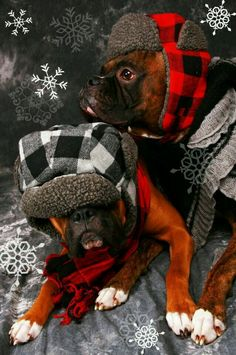 i really cant stay baby its cold outside boxer by juana