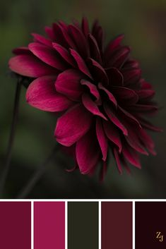 Color palette with a pop pink, red, burgundy on green and black. Color palette with a pop pink, red, burgundy on green and black. Color Schemes Colour Palettes, Red Colour Palette, Color Combos, Green Palette, Monochromatic Color Scheme, Color Balance, Burgundy Color, Color Red, Burgundy Wine