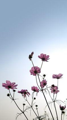 ดอกไม้::…Click here to download cute wallpaper pinterest ดอกไม้ Download cute wallpaper pinterest: ดอกไม้ Here  >