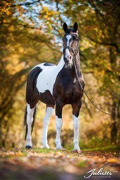 paard, herfst, fotoshoot, fotografie, foto, horse, paardenfotografie, www.juliettefotografie.nl
