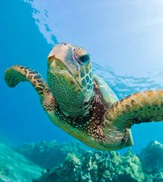 Onderwaterparadijs: duiken in Oman