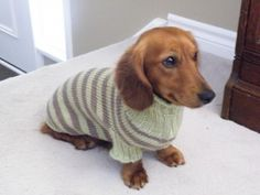 Knitted Dog Sweater Pattern. Hey Kyra Taurasi needs one of these. Maybe not stripes though, don't want hom looking chubby!