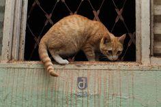 Gatos  Gatas e Fotografia