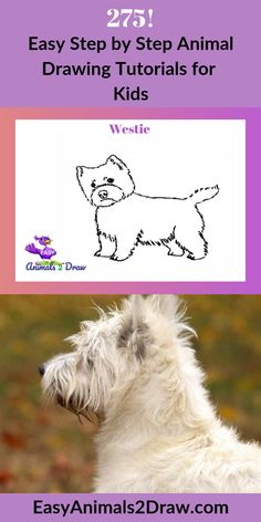 Learn how to draw an amazing Westie dog with this easy and inspirational step-by-step drawing tutorial for kids of all ages! Start by drawing the head of the dog. Draw a curved line in graphite pencil. to draw a dog to draw animals Fish Drawings, Horse Drawings, Animal Drawings, Dinosaur Drawing, Cat Drawing, Nature Drawing, American Animals, Australian Animals, Westie Dog