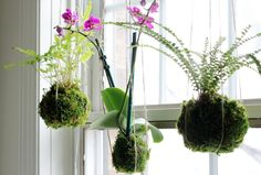 Hang moss-wrapped plants in the window  If you don't have enough sunny spots in your home, hang plants directly in the window like this. (Patti @Garden Matter)