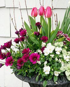 """107 """"Μου αρέσει!"""", 14 σχόλια - Susan Nock (@sngardendesign) στο Instagram: """"A little cheer for your Monday... I love planting these urns each year. Swipe to see how they…"""" Urn, Floral Wreath, Wreaths, My Love, Plants, Instagram, Gardening, Home Decor, Ideas"""