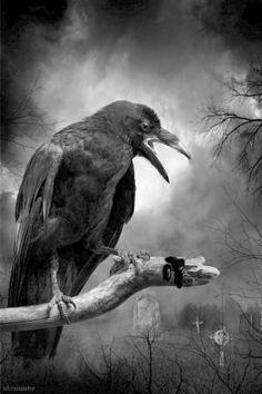 crow by ola