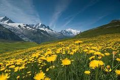 「mountain flowers」の画像検索結果