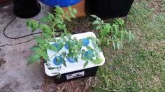 DIY - How to build a plant cloner