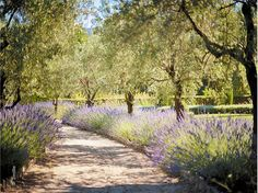 I can imagine walks along this lavender lined pathway.  Heavenly!