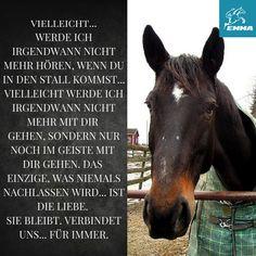 pferde sprüche weisheiten Die 104 besten Bilder von Pferde Sprüche | Equestrian, Horse  pferde sprüche weisheiten