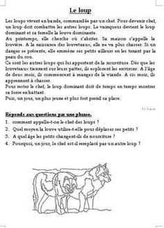 Lecture documentaire CE1 (en textes) le loup French Worksheets, Worksheets For Kids, French Expressions, French School, French Lessons, Learn French, Reading Comprehension, Education, Drawings