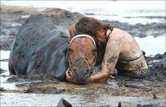 Cavalos | Imagens para Facebook