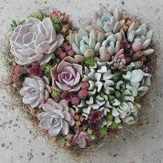 Heart Shape Succulent Wreath