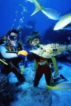 Scuba divers feeding a filefish at John Pennekamp Coral Reef State Park: Key Largo, Florida