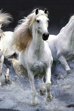 Horse Heard