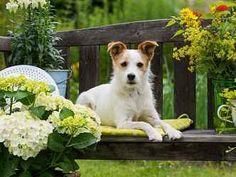 Rostlin nebezpečných pro psy je celá řada. Small Garden Bench, Backyard Ideas For Small Yards, Small Backyard Gardens, Backyard Garden Design, Backyard Landscaping, Garden Benches, Dog Backyard, Patio Ideas, Landscaping Ideas