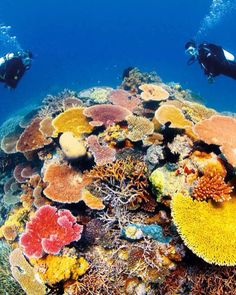 Great Barrier Reef, Australia: A Natural Wonder of the World