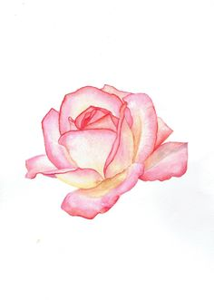 Rose Watercolor framed original handmade painting livingroom, makeup, bedroom decor - All About Watercolor Rose, Watercolor Cards, Watercolour Painting, Painting & Drawing, China Painting, Cool Drawings, Pencil Drawings, Horse Drawings, Pencil Art