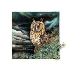 Long eared owl. Claudia Hahn. Heliocyan.deviantart.com on @DeviantArt