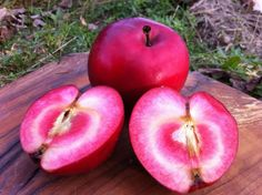 """Unboring your cider habits with Cidre Beaupré Rosé Cider, made from naturally pink Geneva apples. High on our 2013 tasting of specialty ciders with 95 """"charming"""" points. Geneva, Apple Cider, Apples, Beverages, Beer, Engagement, Fruit, Rose, Nature"""