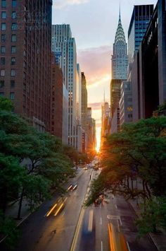 Manhattan Hedge