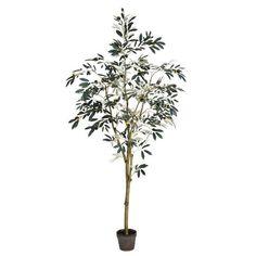 6' Olive Tree in Planter Pot