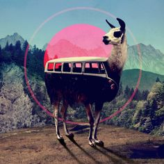 VW Llama bus for magic road trip adventures