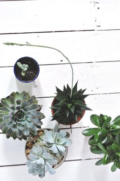 succulents via @Sarah Chintomby Chintomby~Louise Kimmer | LapinBlu