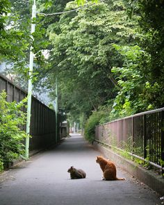 NEKOくらぶ (@nekoclub_jpn) • Photos et vidéos Instagramずいぶん緑が濃くなった今日この頃「ご飯は変わらないけどね」#ねこ #猫 #cat #gato #chat #外猫 #straycat #ねこ部 #ふわもこ部 #猫好きさんと繋がりたい #cutecats #followme  #Regram via @kiyochan_cats Cat Coffee Mug, Cat Mug, Cute Cats, Funny Cats, Japanese Cat, Cat Food, Neko, Cats And Kittens, Country Roads