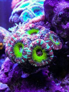 Check out the lighting you need to get your corals to grow and pop. Underwater Creatures, Underwater Life, Ocean Creatures, Saltwater Fish Tanks, Saltwater Aquarium, Coral Reef Aquarium, Fish Tank Lights, Marine Tank, Salt Water Fish