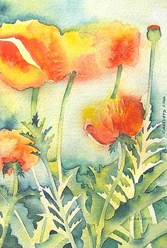 Flower Art Orange Poppies Watercolor, by 6catsart on Flickr