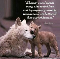 a mother's love animals dogs wolf pup Wolf Spirit, Spirit Animal, Wolf Pictures, Animal Pictures, Beautiful Creatures, Animals Beautiful, Soul Meaning, Animals And Pets, Cute Animals