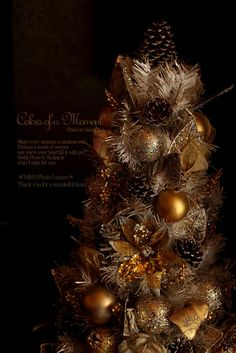 Photo by Saori. M&M Creative Works 【Christmas】
