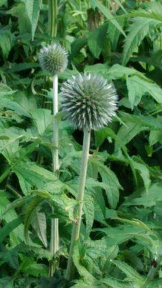 Interesting spiky plant